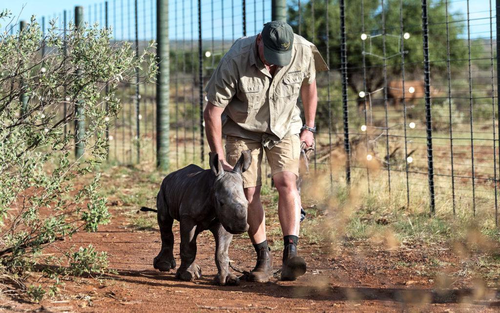 wicus petting baby rhino