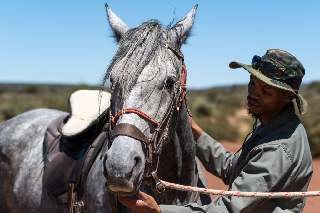 Rockwood ranger taking care of horse