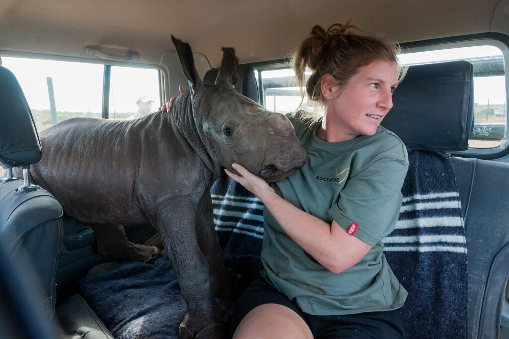Volunteer at Rockwood holding a rhino calf
