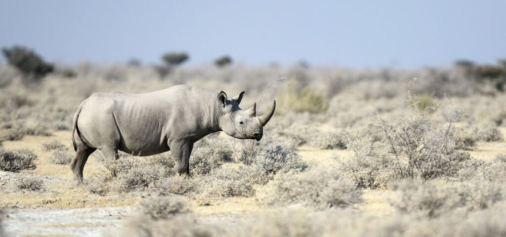 black rhino protect