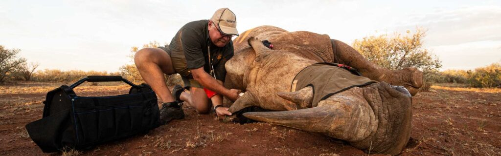 poaching to get rhino horn
