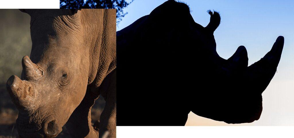worth rhino horn