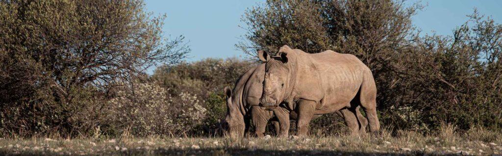 Africa's wildlife crises