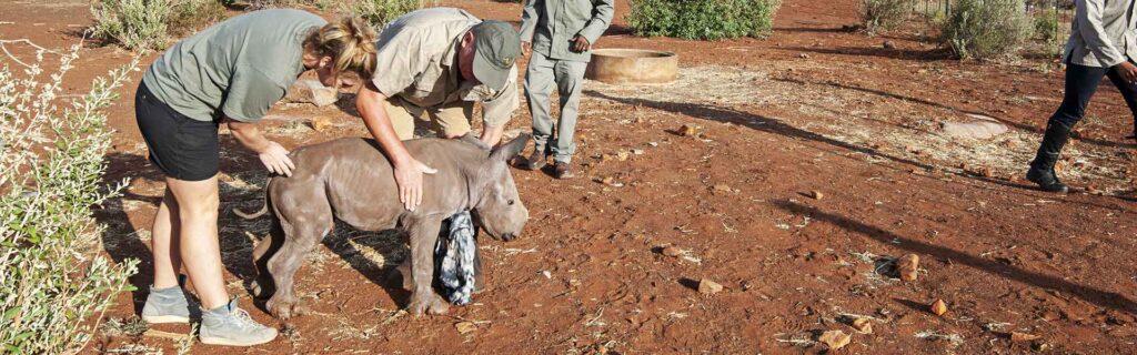 rhino conservation births