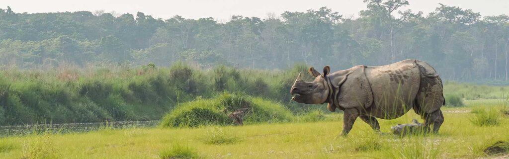javan rhino diet