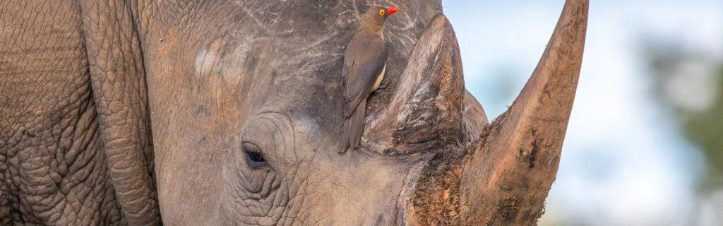 rhino intelligence