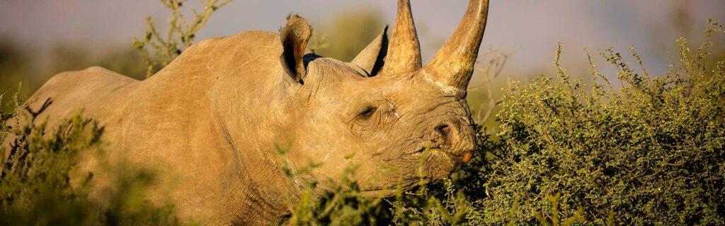rhino species protection