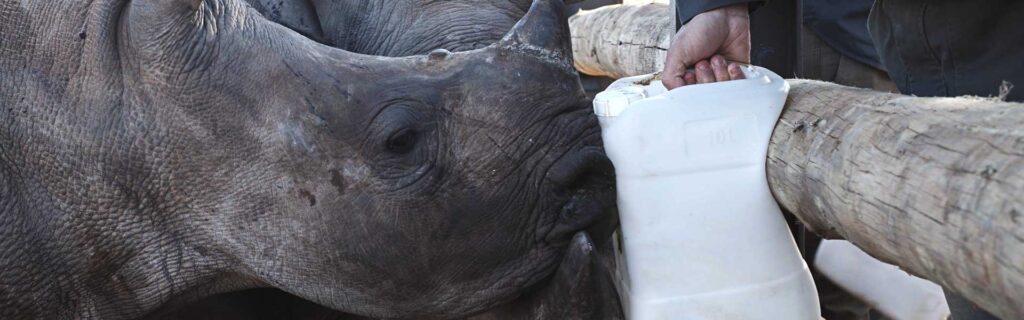 rhino conservation nursery